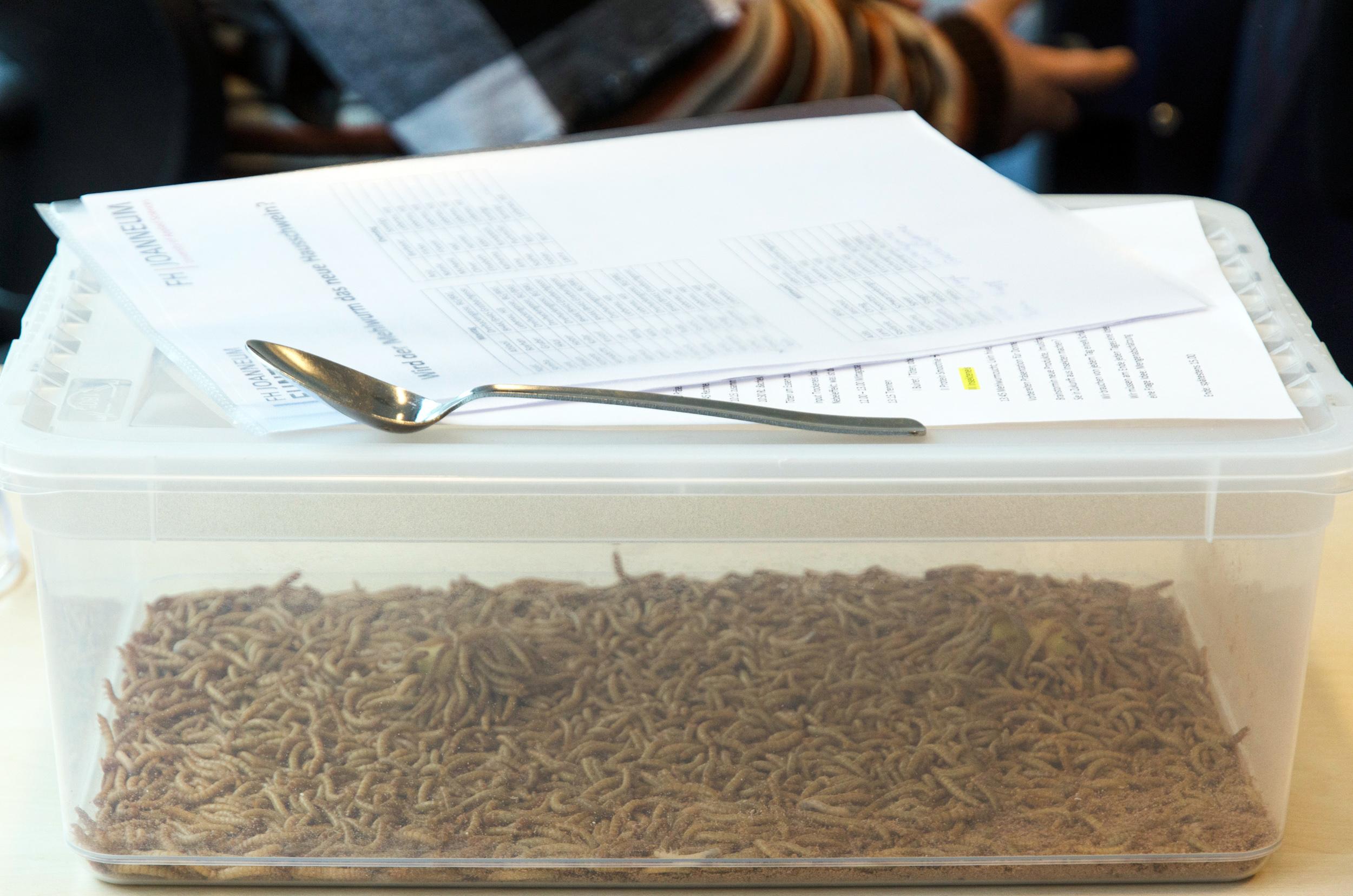 Mehlwürmer in einem Behälter