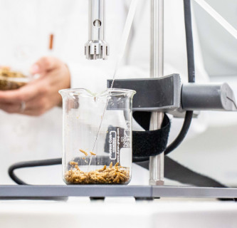 Sustainable Protein: Integrierte Insekten-Innovationen spi³ 14