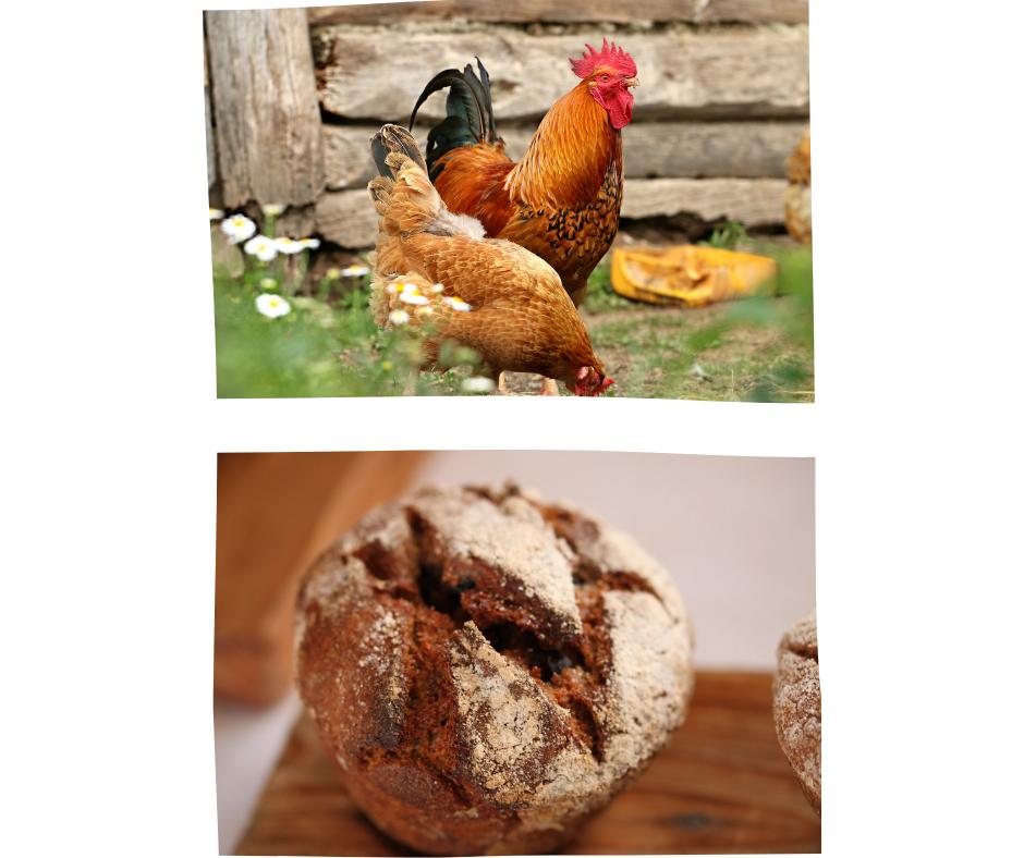 Private Hühnerhaltung und selbstgebackenes Brot sind ganz oben im Trend.