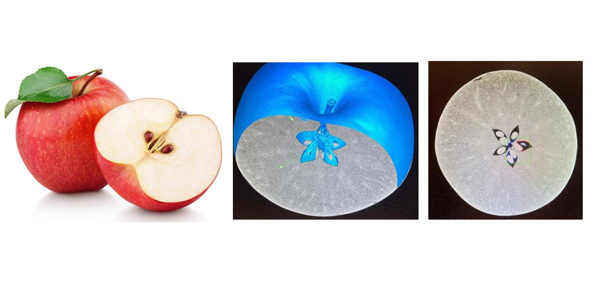 Untersuchung von organischen Strukturen am Beispiel eines Apfels