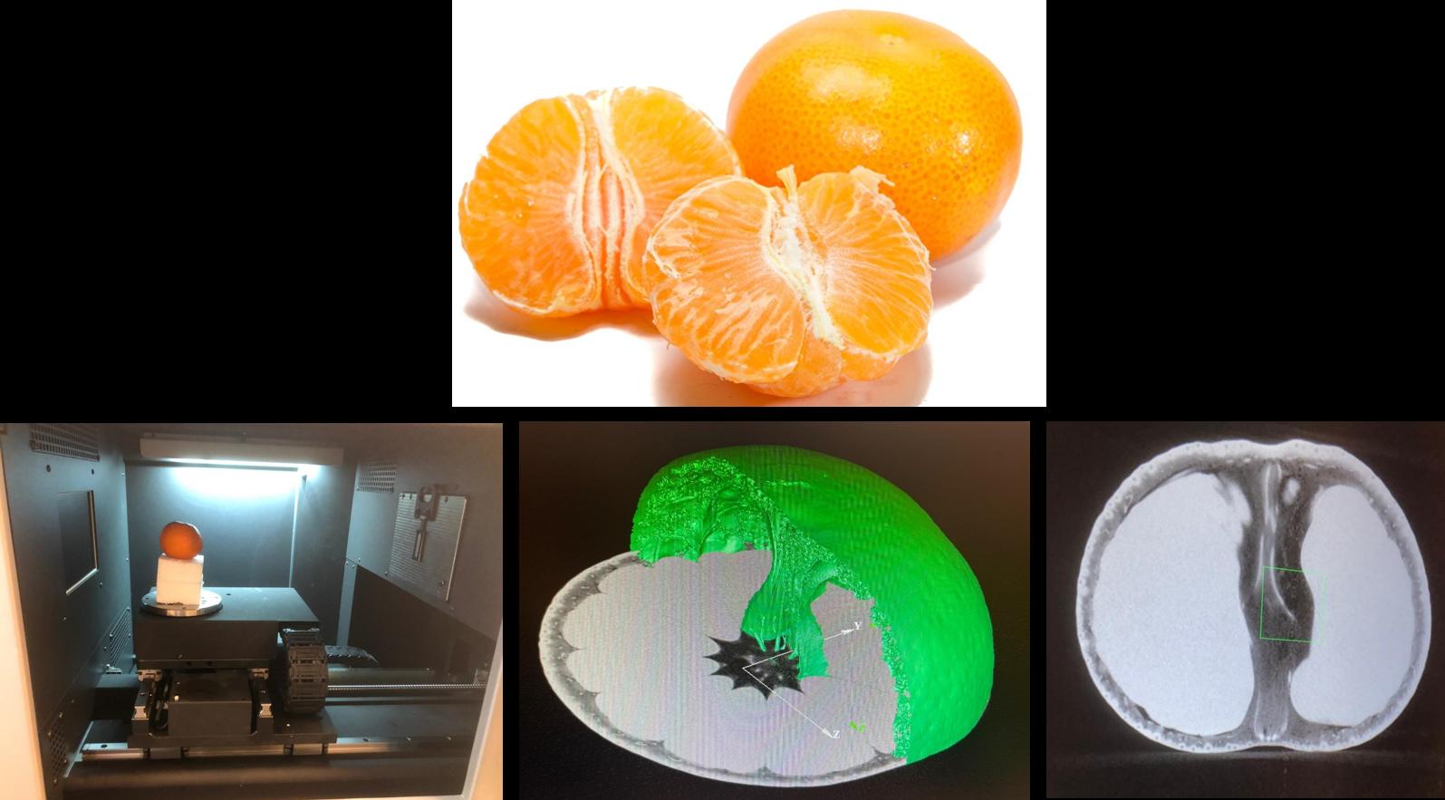 Untersuchung von organischen Strukturen am Beispiel einer Mandarine