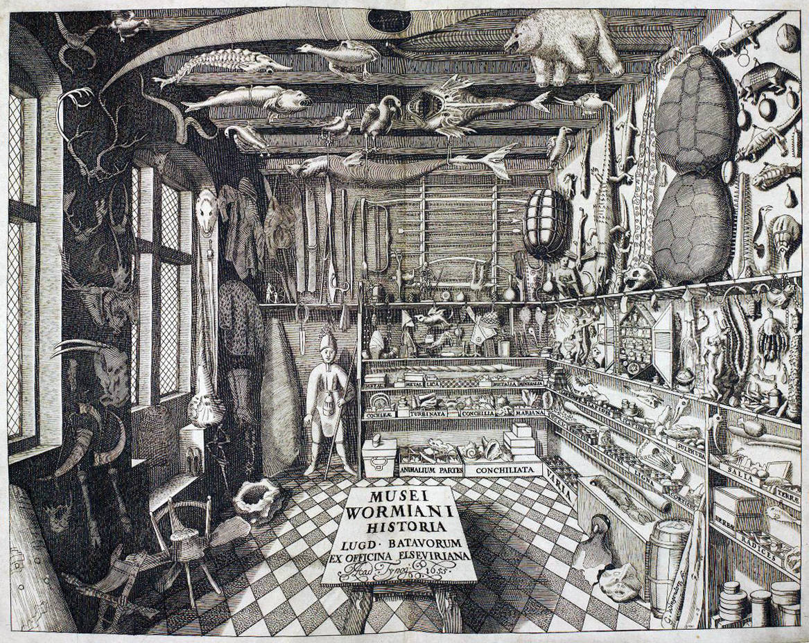 Vorläufer der modernen Museen war die Wunderkammer.