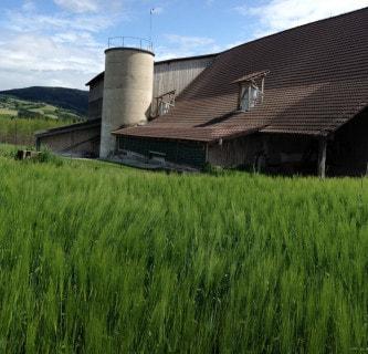 Bauernhof 21 5
