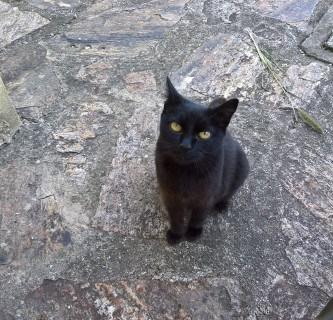 Best Paper Award für Cat Content-Forschung 1