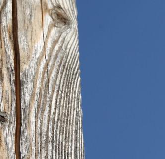 Welches Holz für welchen Zweck?